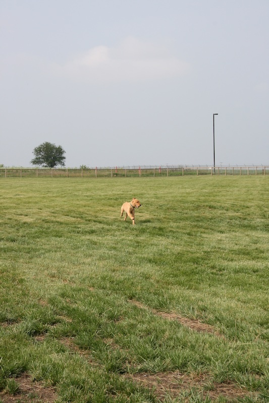 dog playing in the park